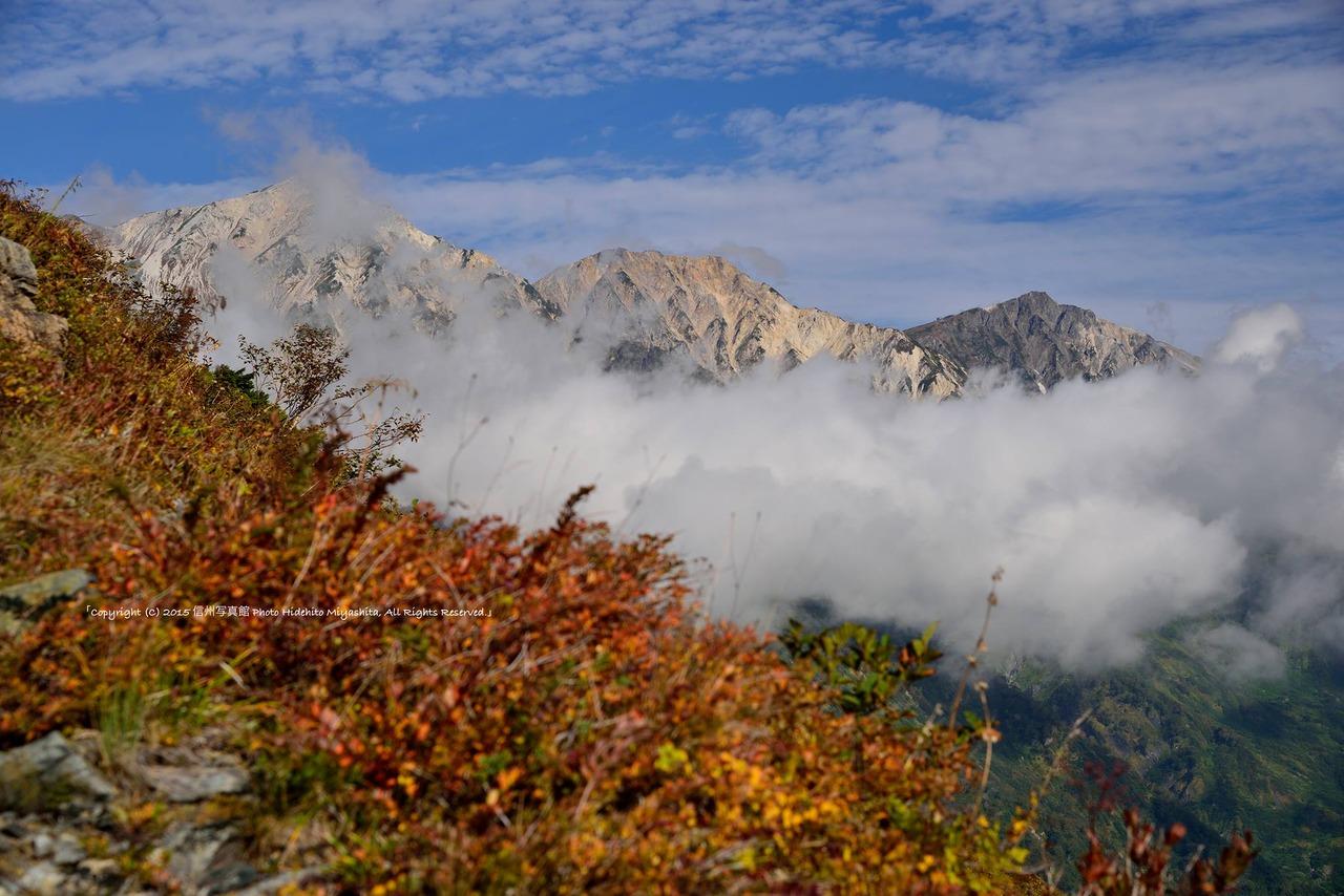 草紅葉と白馬三山