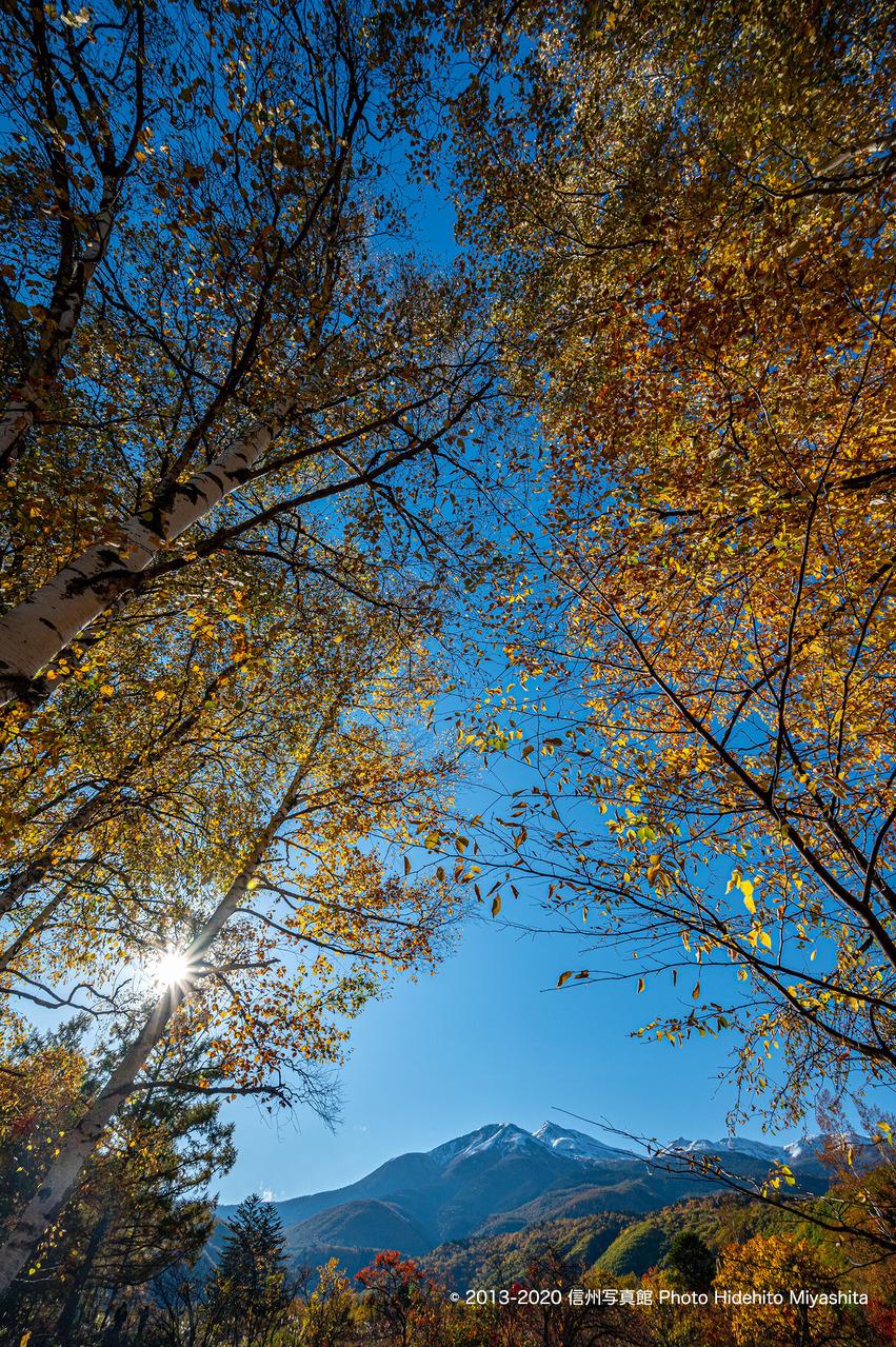 黄葉と乗鞍岳_20201018-DSC_6813