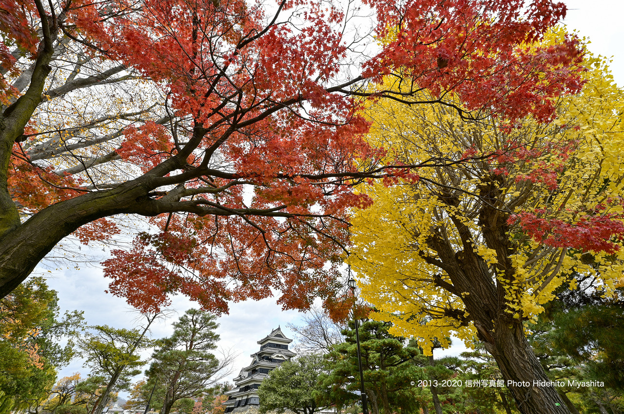 紅葉と黄葉_20200112-_DSC0072