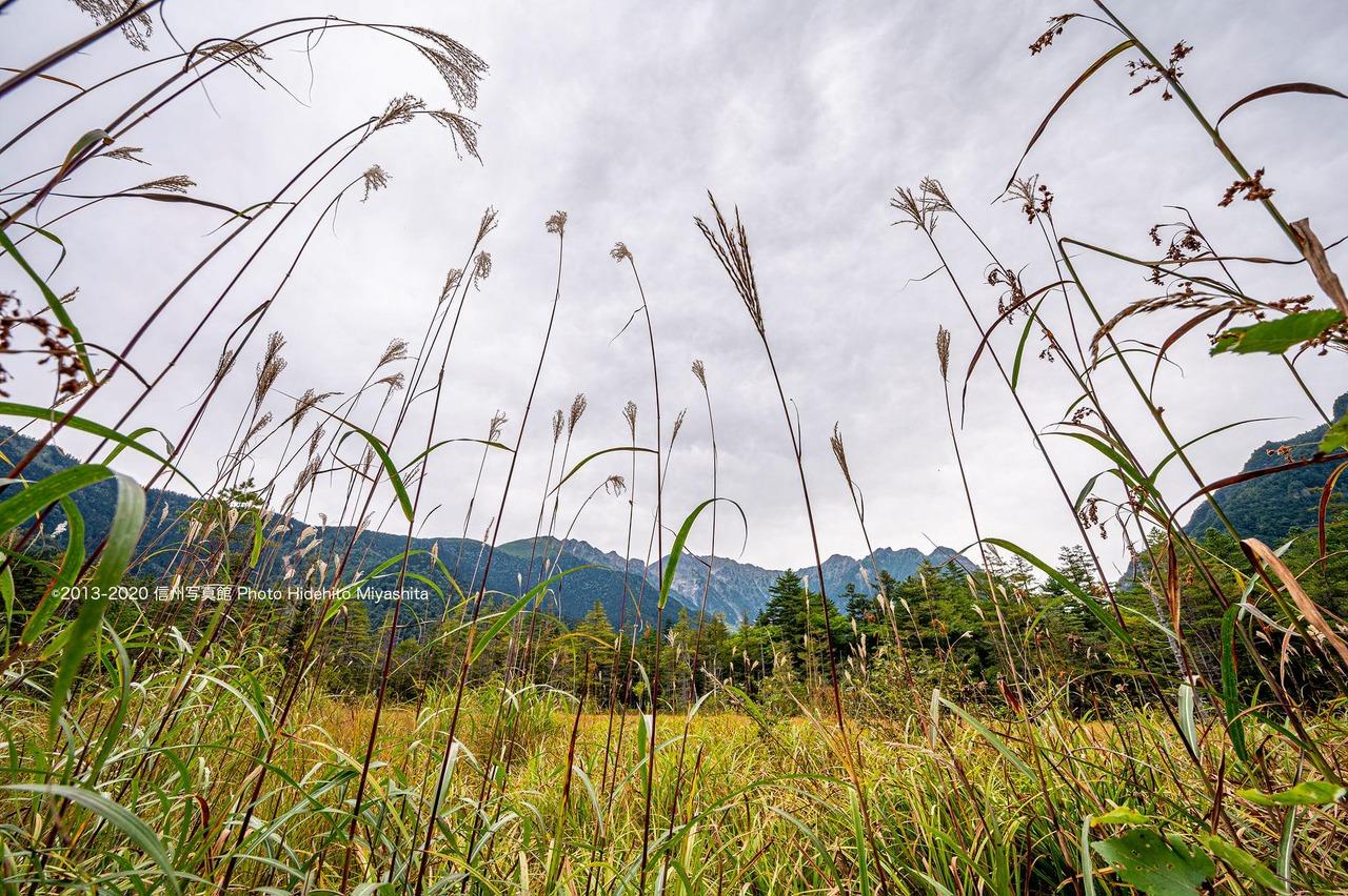曇り空の田城湿原