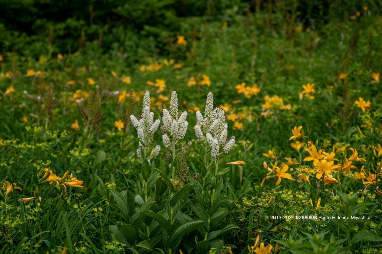 鎌池湿原のお花畑