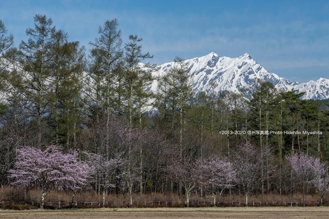 桜と鹿島槍ヶ岳その2