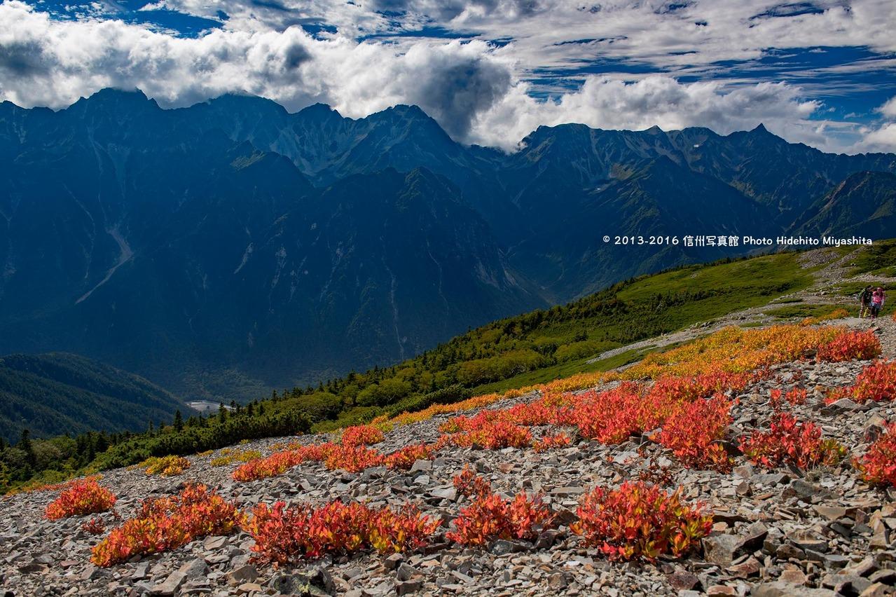 草紅葉の蝶ヶ岳