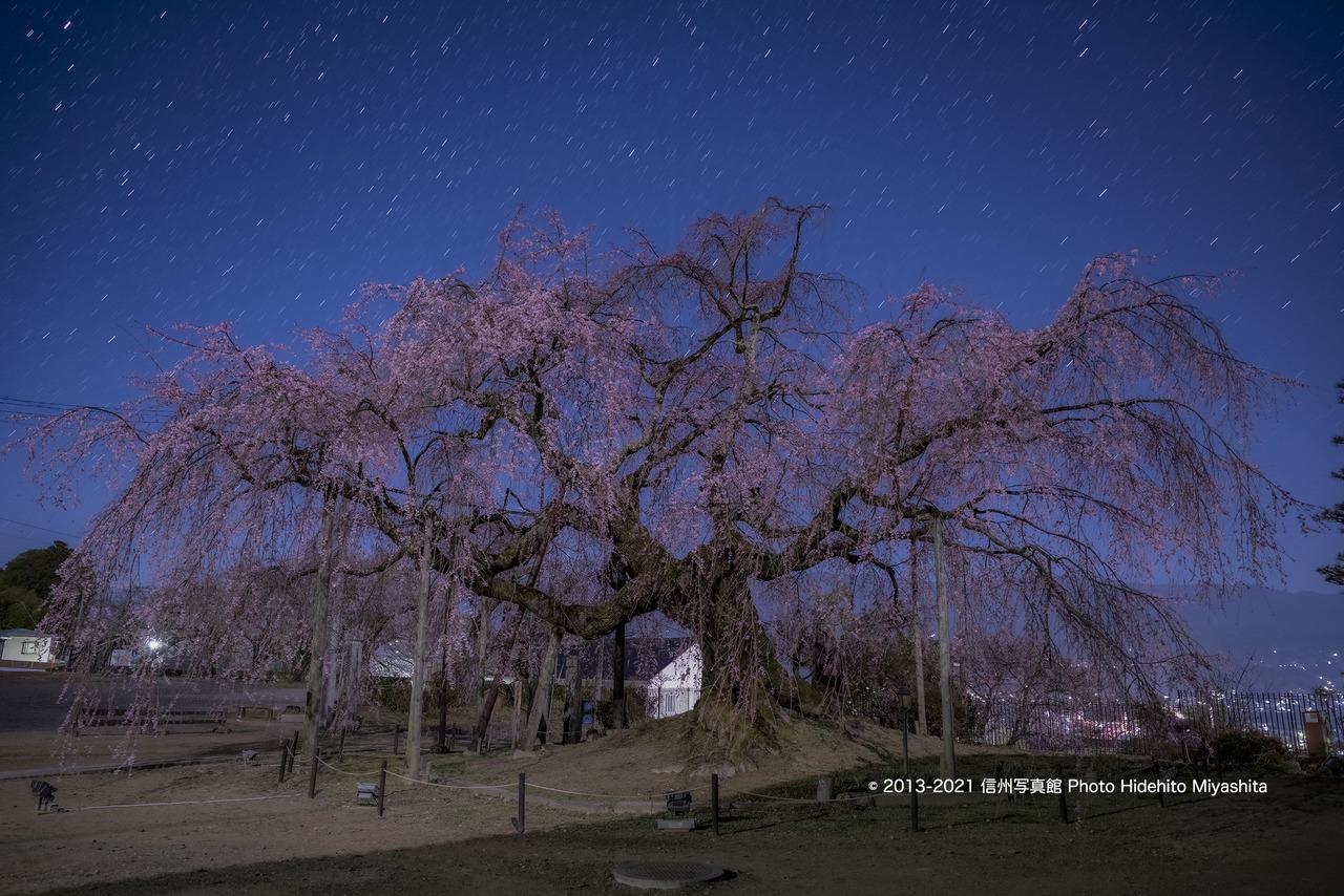 深夜の舞台桜_20210326-20210326-_DSC3338