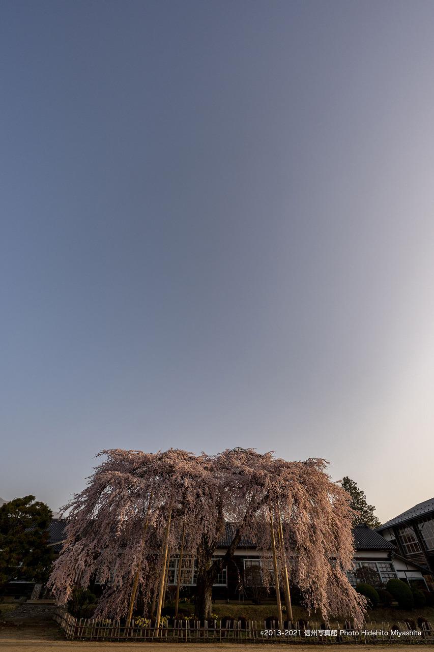 朝陽に照らされ_20210331-_DSC4707