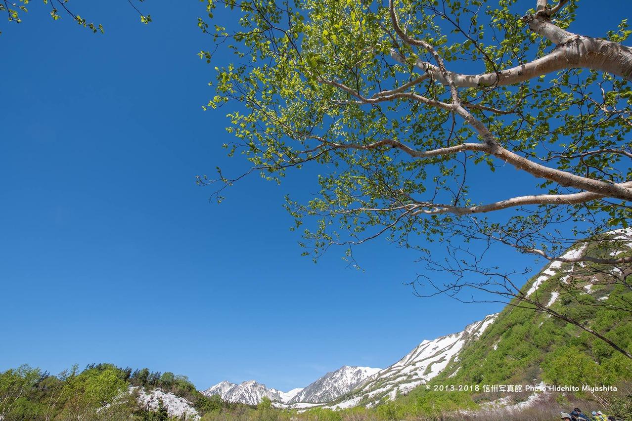 青葉と白馬三山