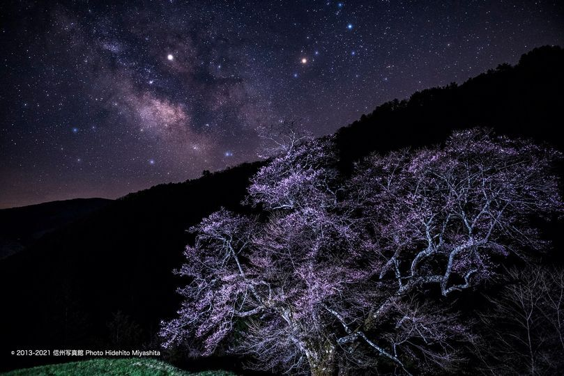 2017 駒つなぎの桜