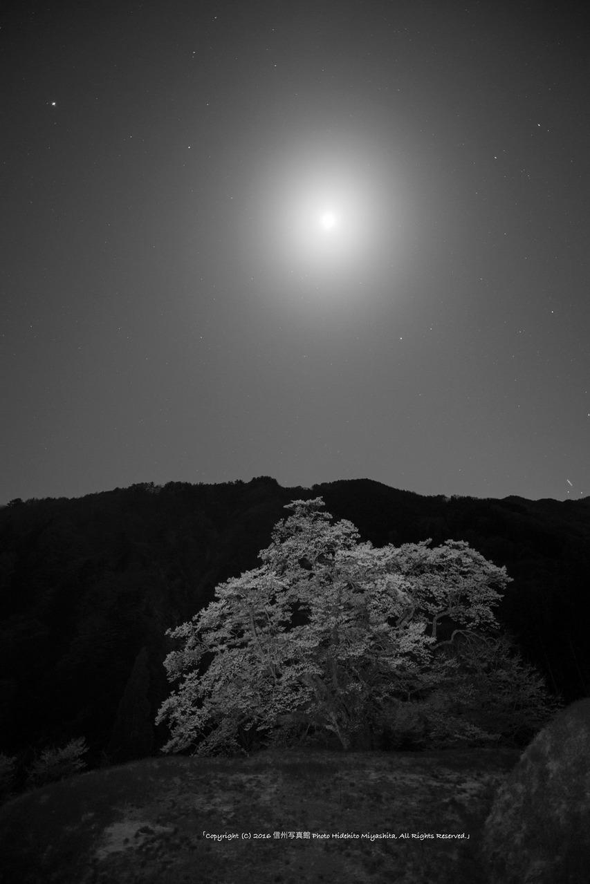 月夜の駒つなぎ