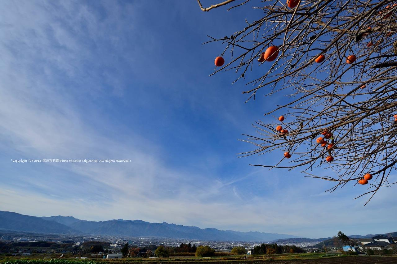 秋の空と残り柿_o