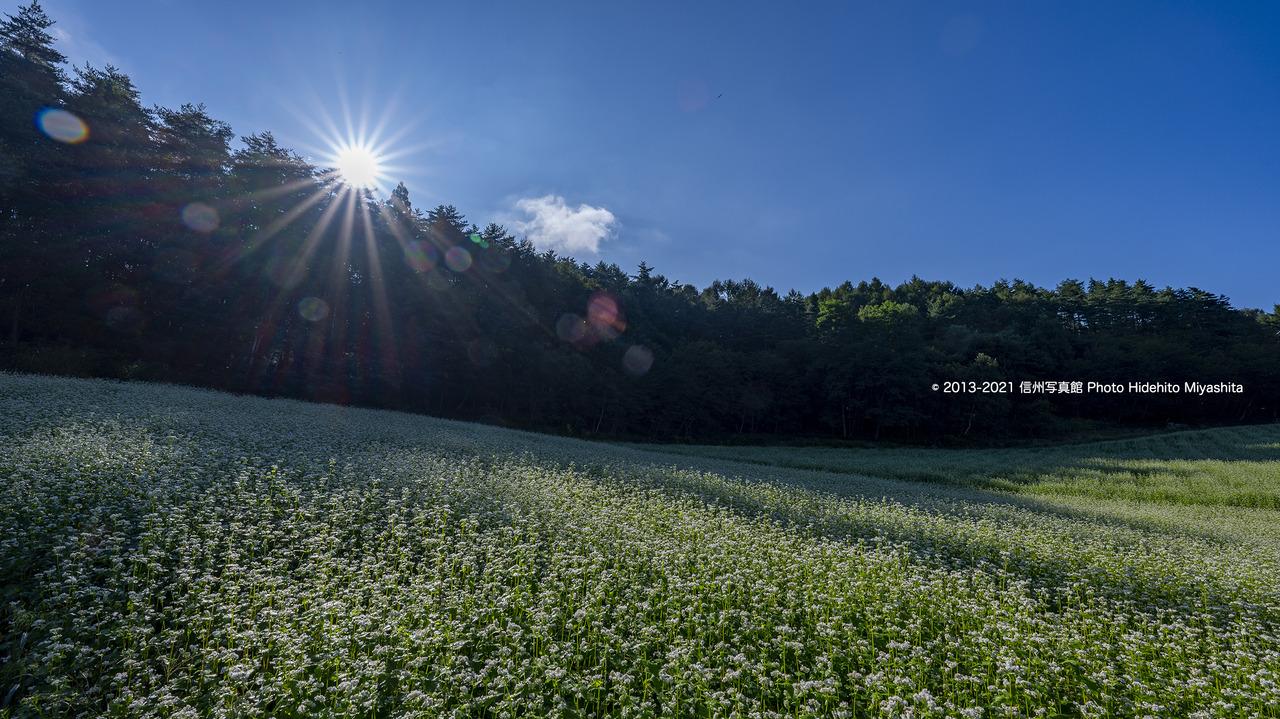 高原の朝20210828-_DSC7163
