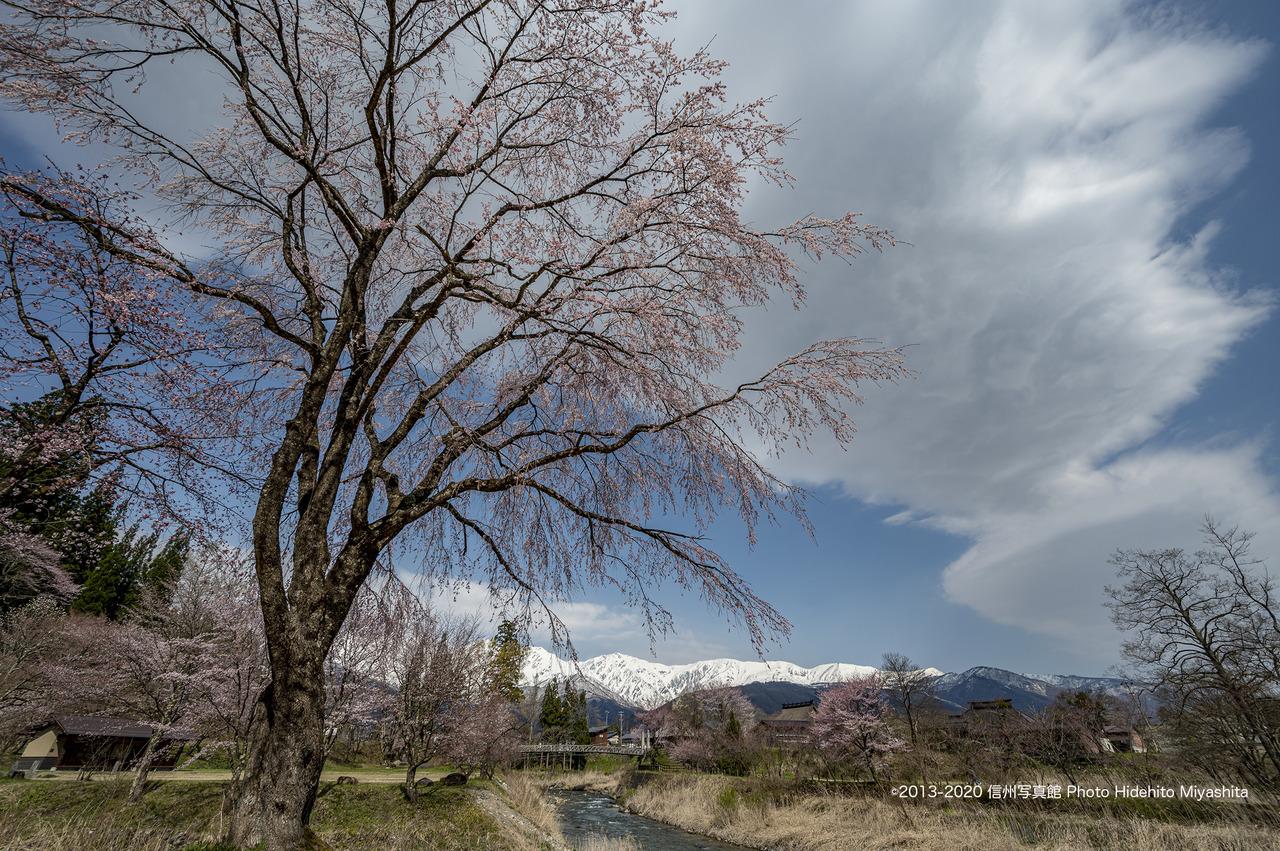 桜咲く大出_20200429-DSC_1196