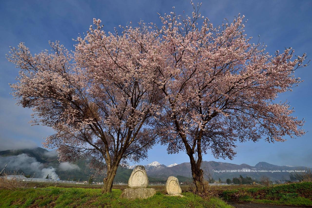 常念道祖神の春