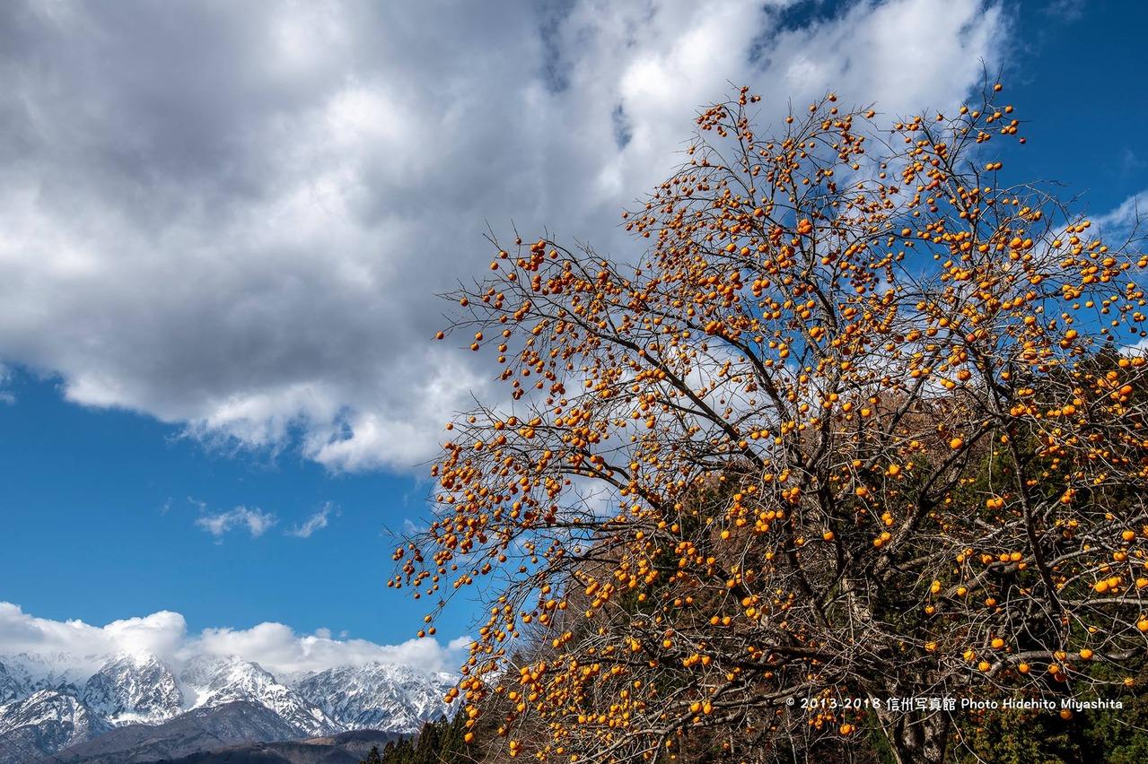 柿と白馬三山