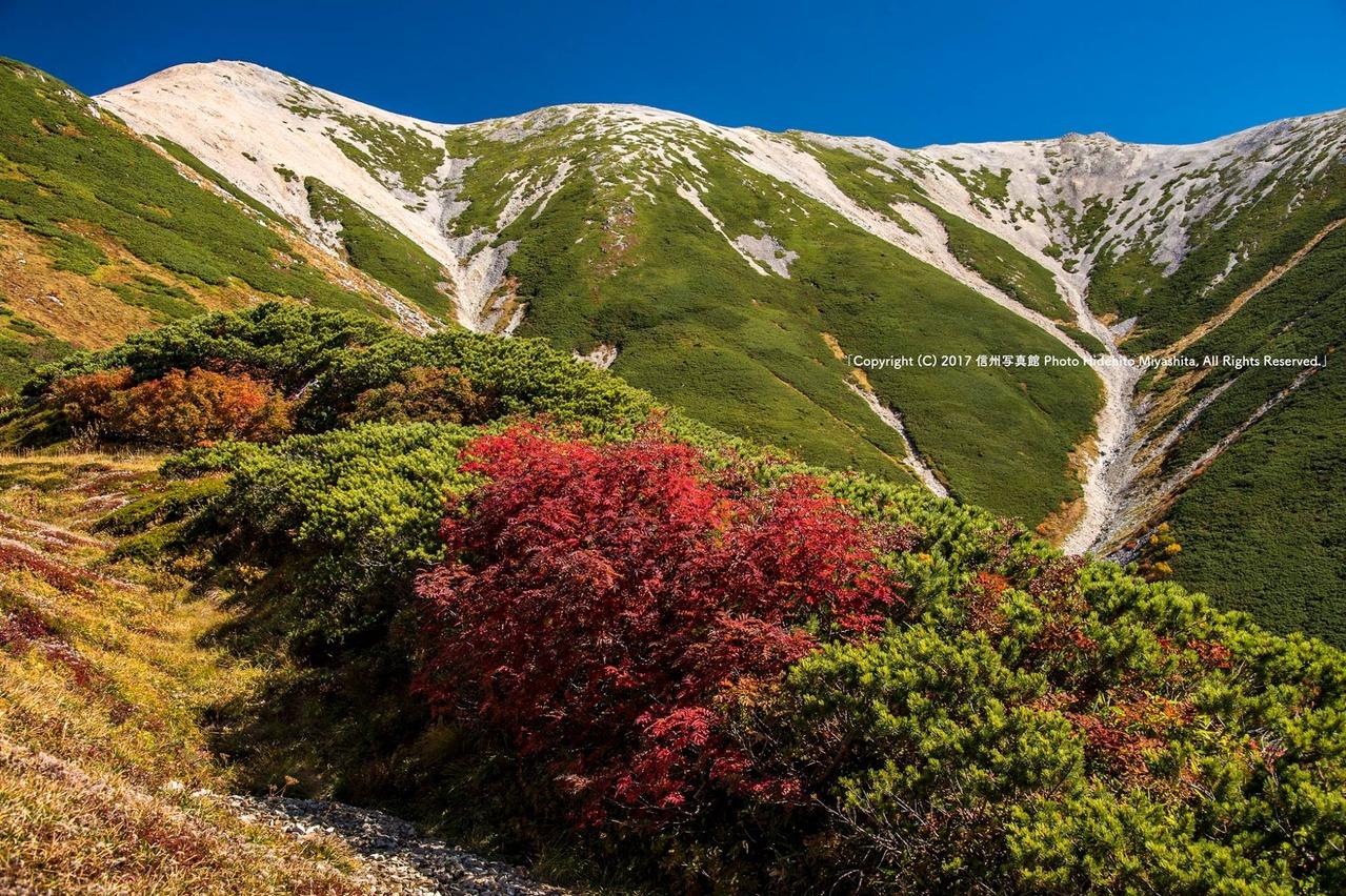 薬師岳東南稜と紅葉のナナカマド