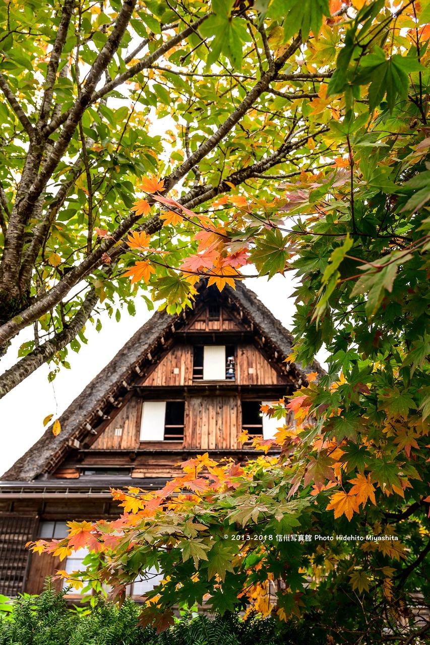 秋への移ろい