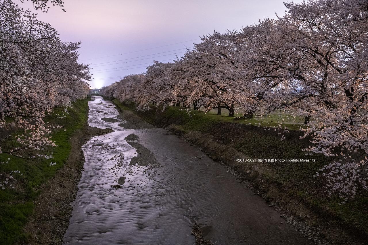 夜の黒沢川_20210403-_DSC5714