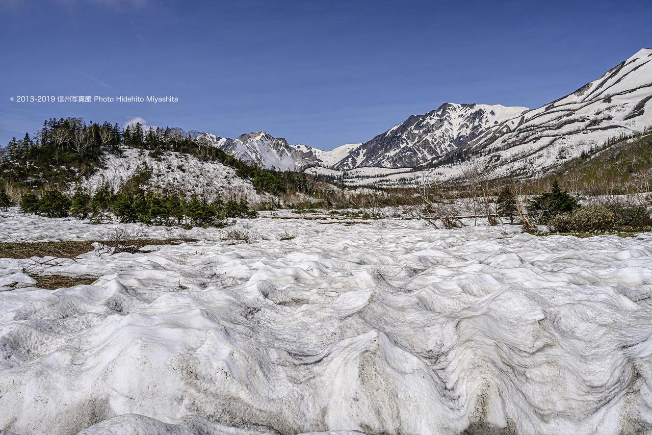 残雪の栂池自然園 20190606-_DSC3716