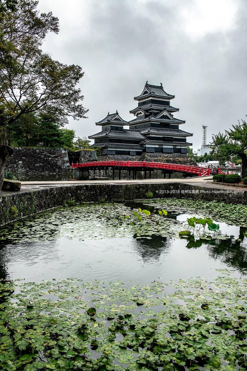 蓮池越しの松本城