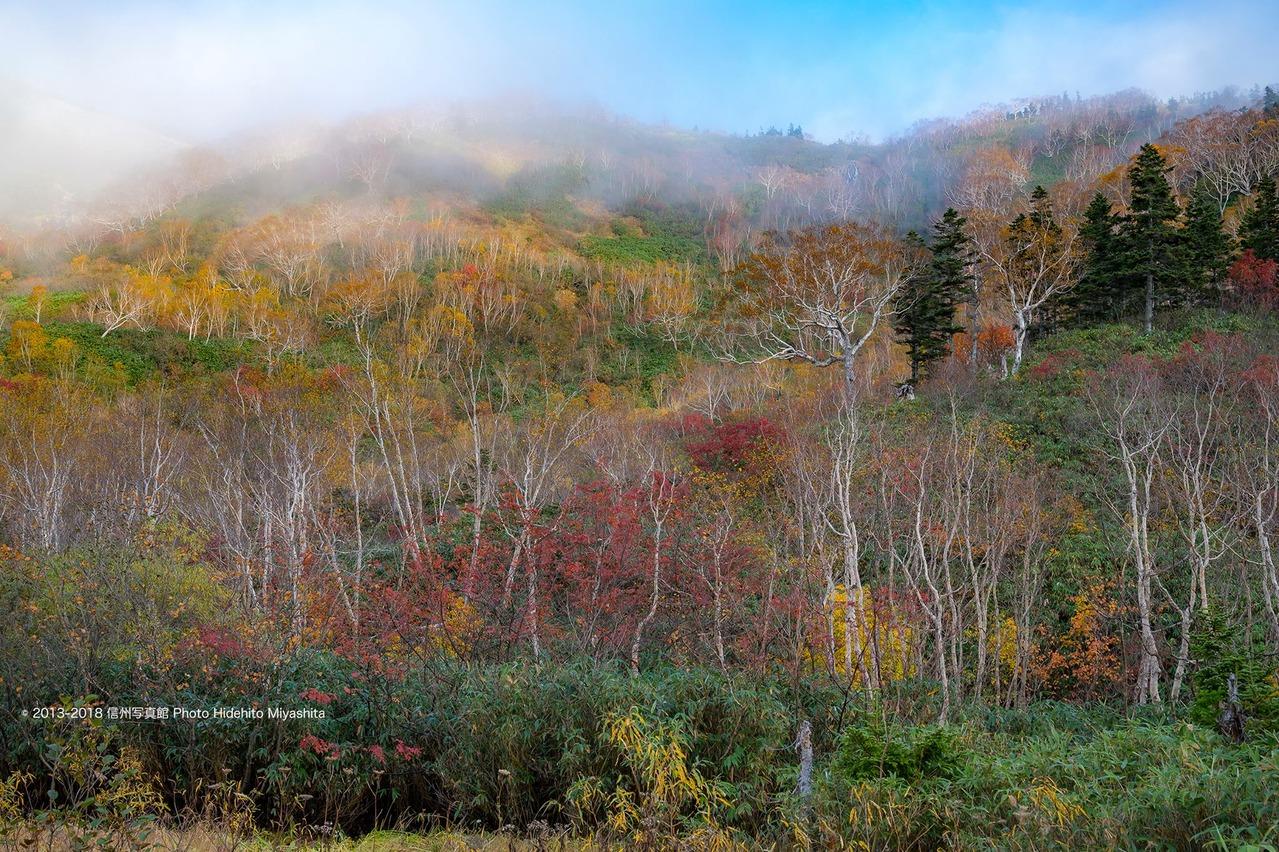 栂池の秋色