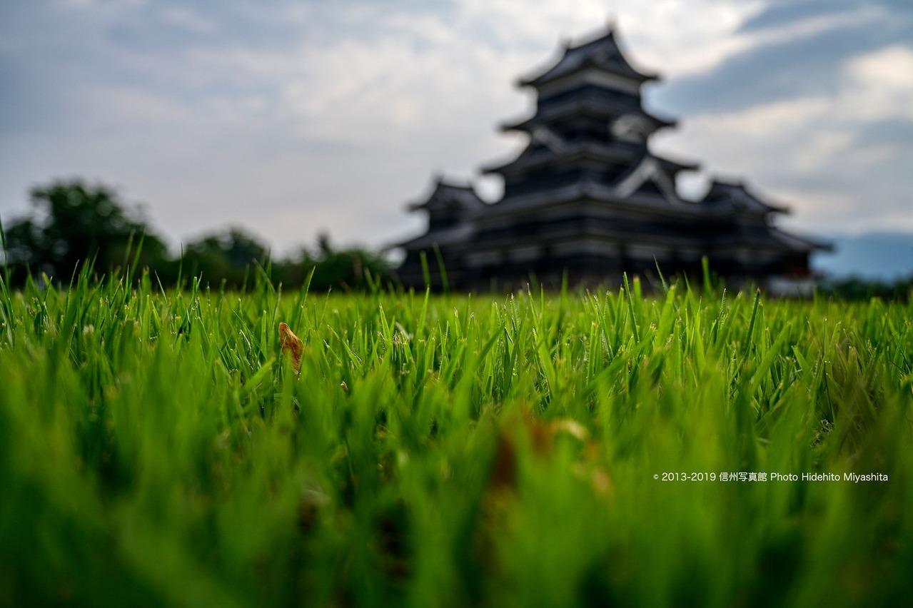 芝越しの松本城