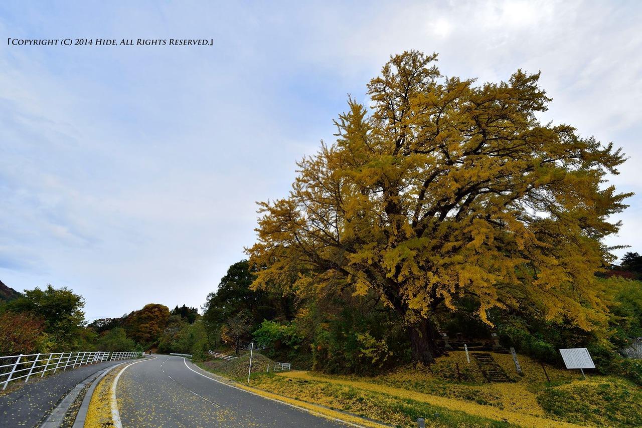 黄色い大樹