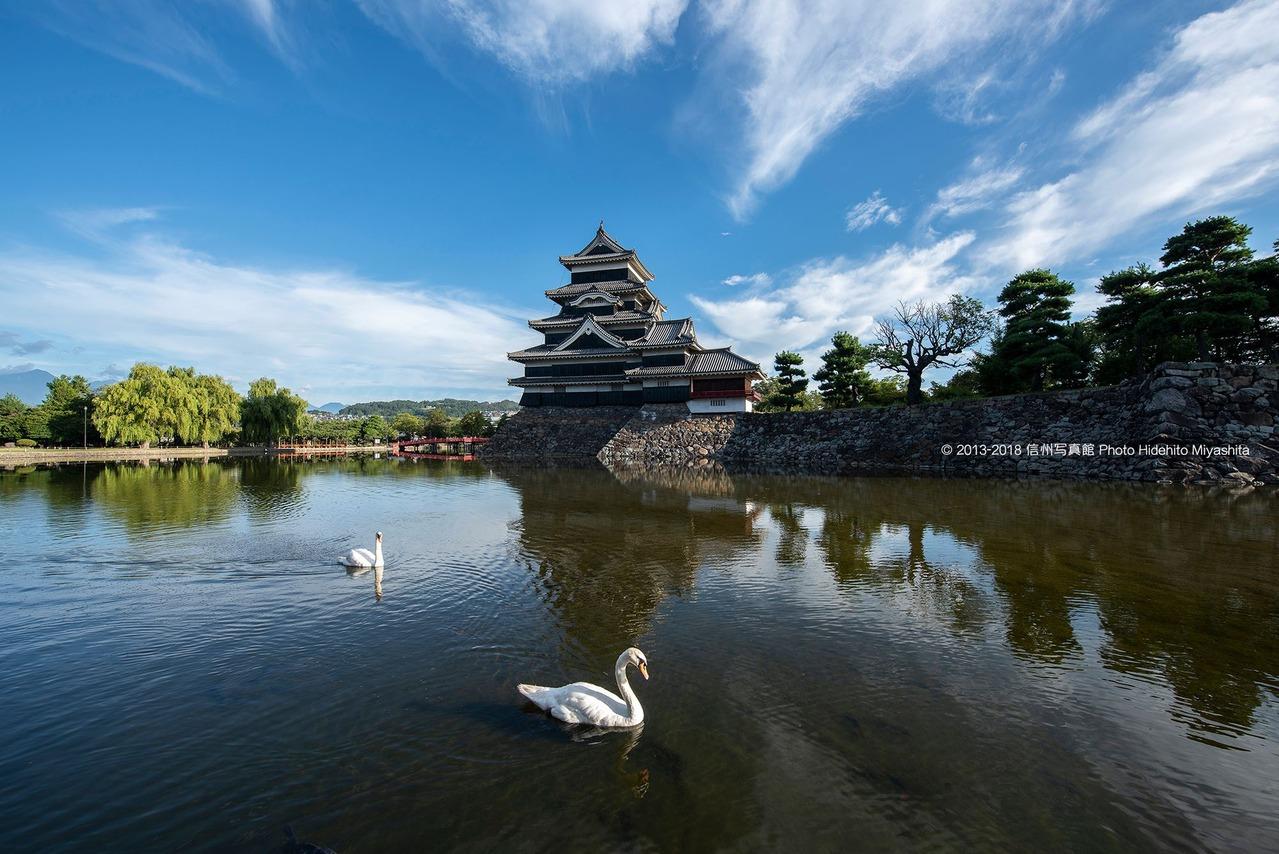 白鳥と松本城
