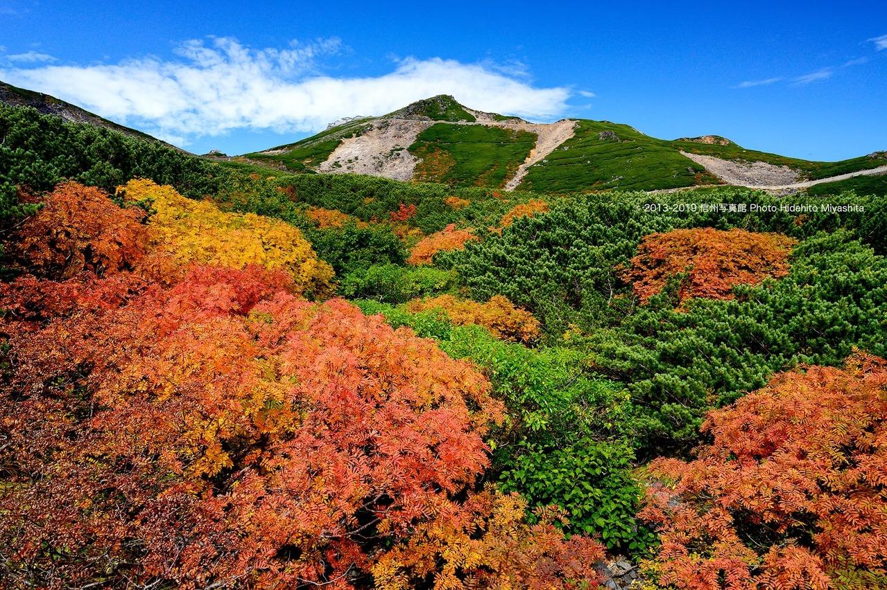 秋の色鮮やかに