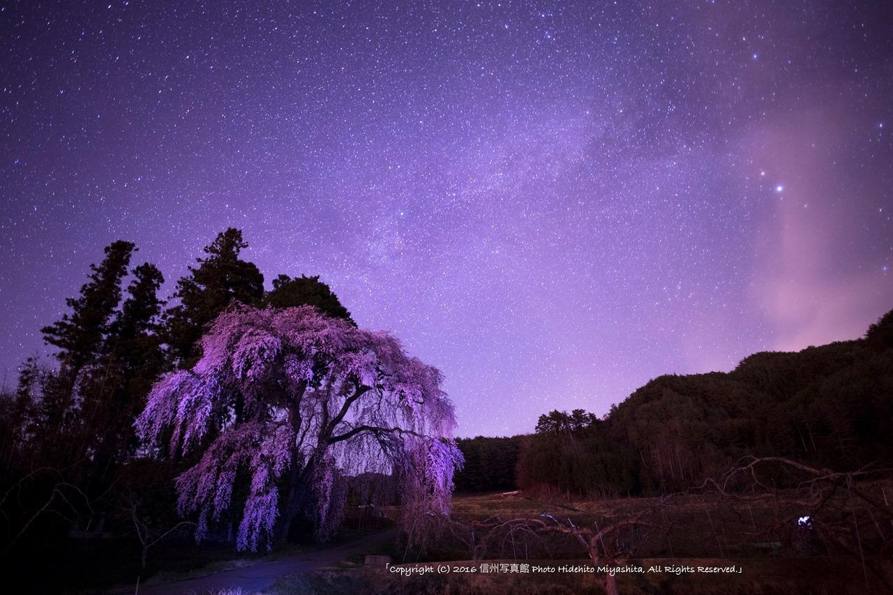 夏の銀河と桜