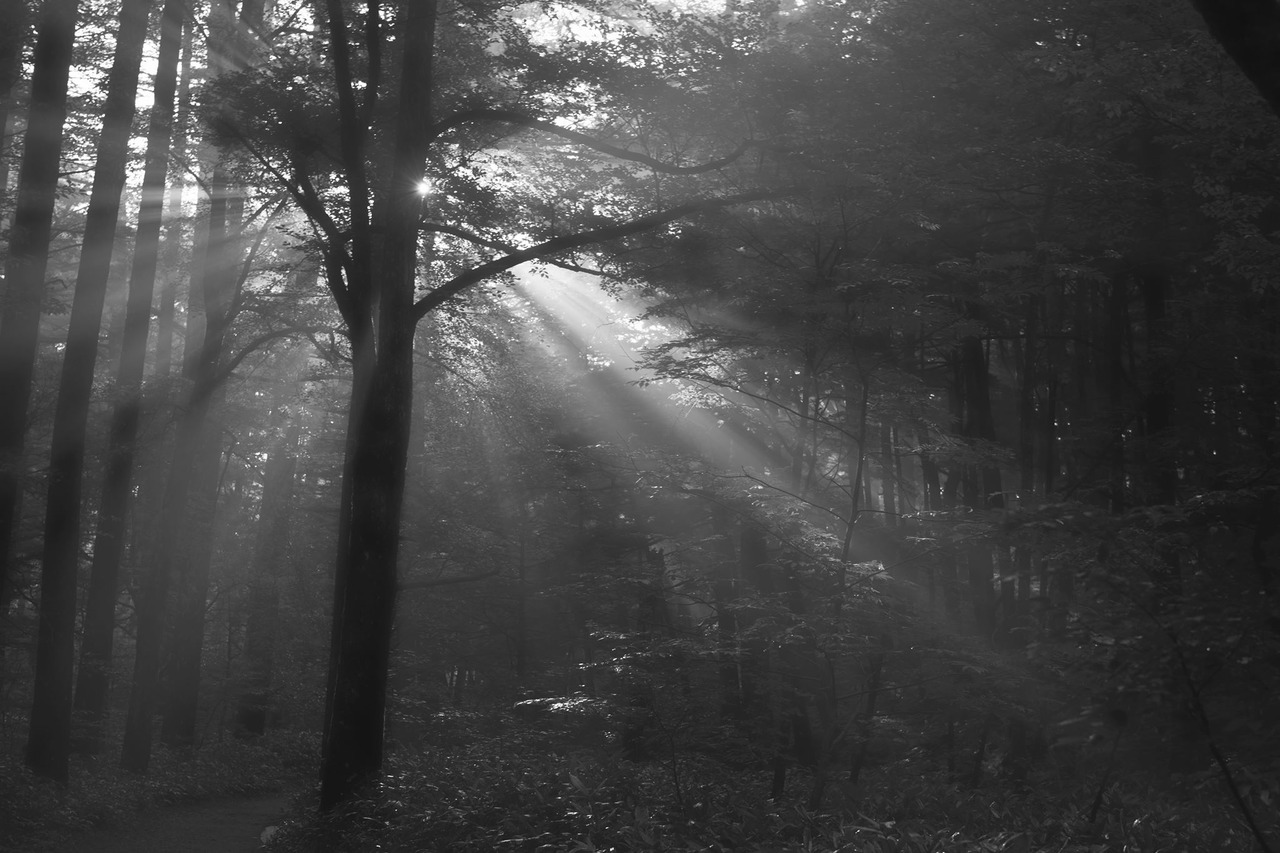 木々から溢れる光芒