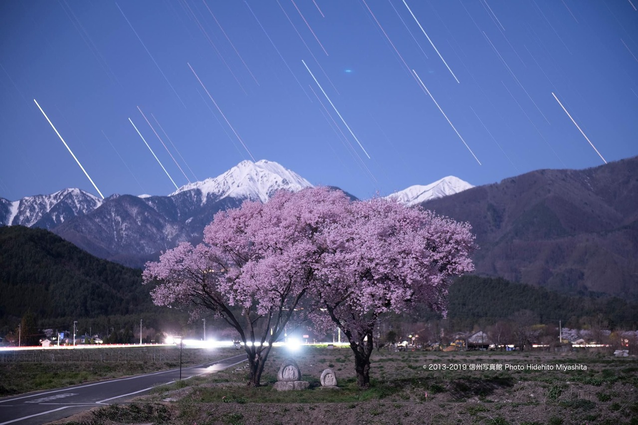 常念岳道祖神の桜 2019