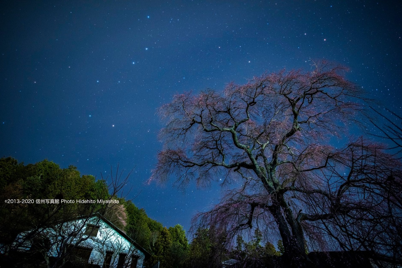 北斗七星と石塚桜