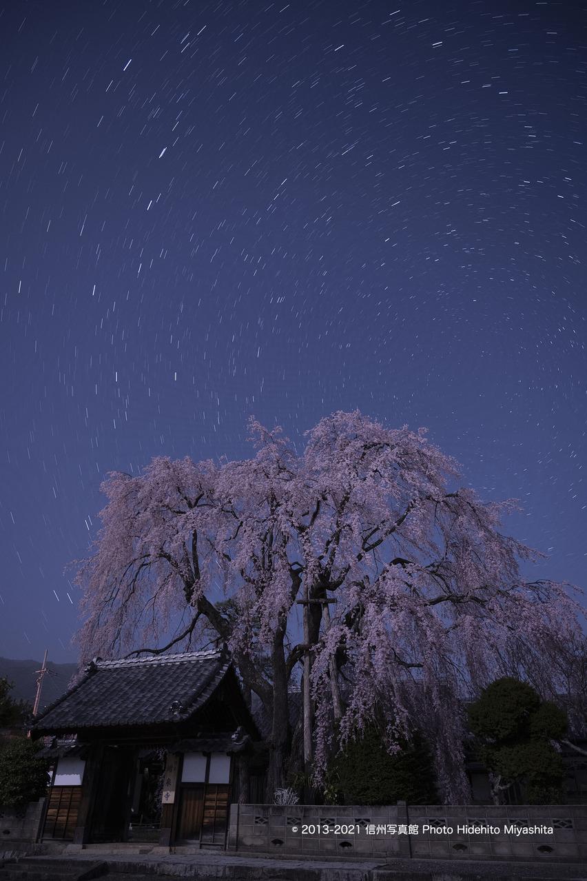桜と北斗七星_20210331-_DSC4718