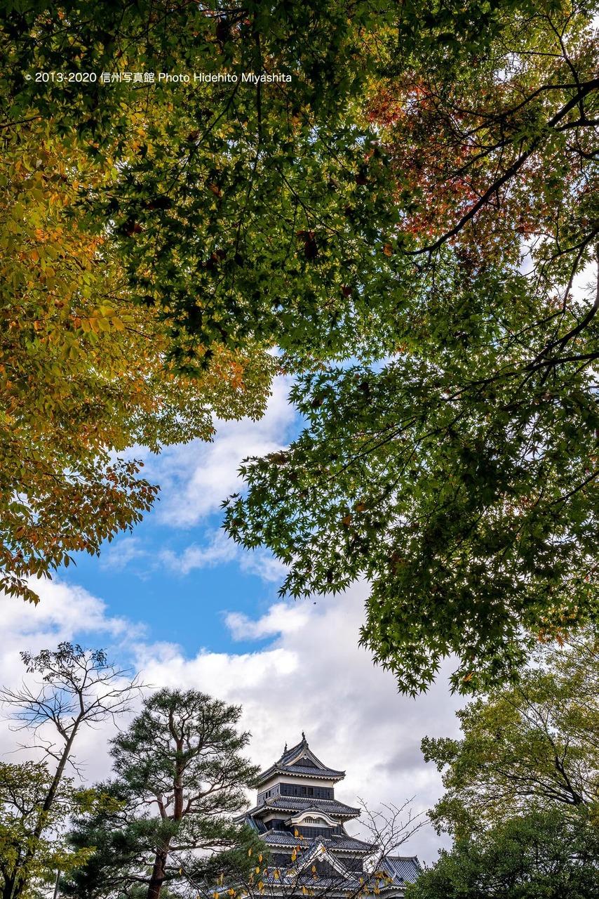 秋の彩りへ