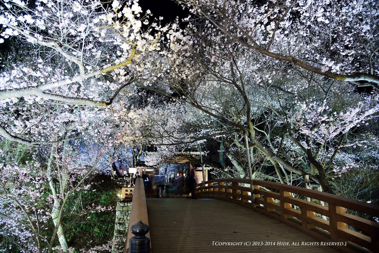 桜咲く桜雲橋