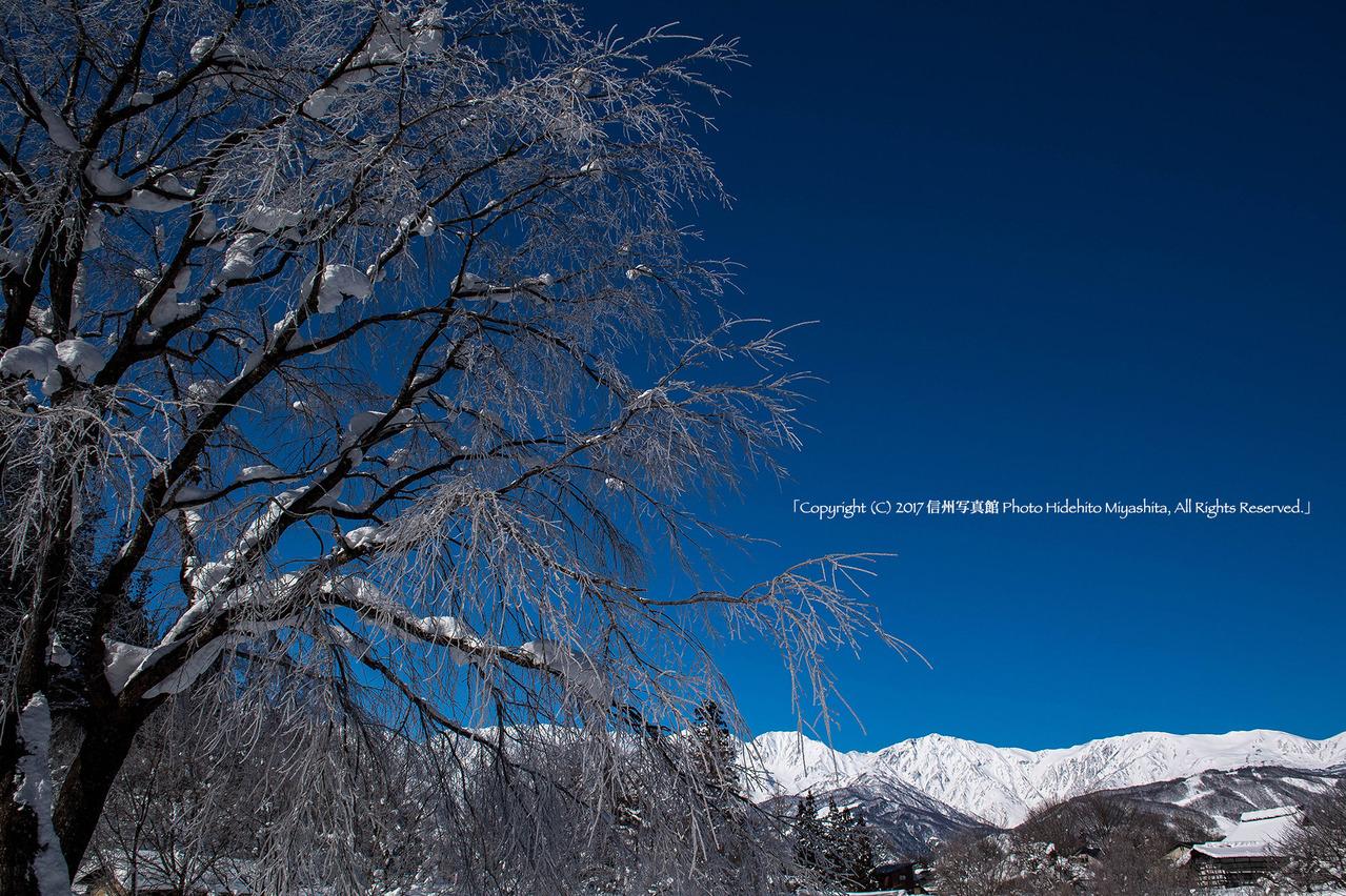 桜と白馬岳20170126-_DSC7706のコピー