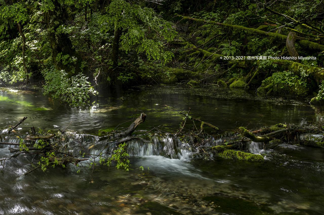 緑の清水川_20210703-_DSC4281