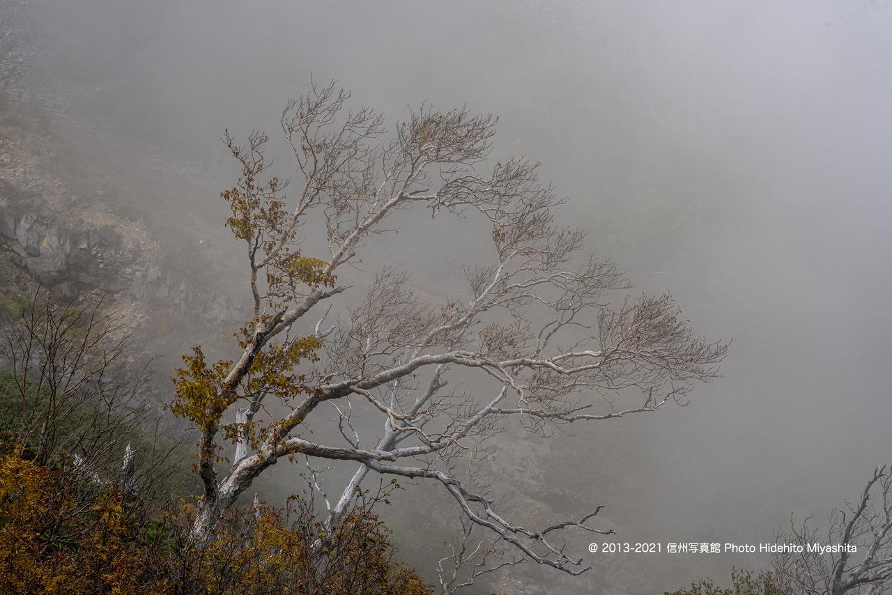 風雪に耐えて20210930-_DSC3328