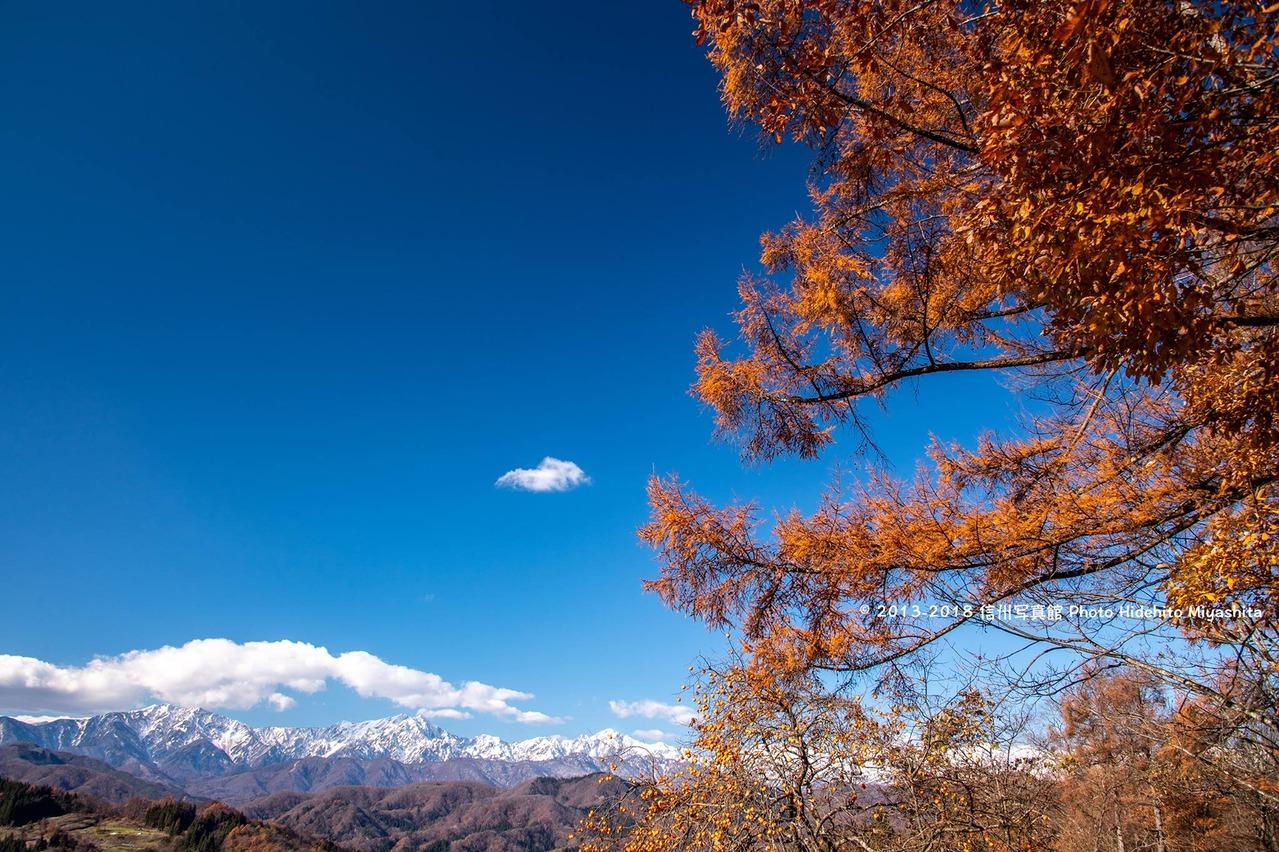 落葉松と仁科三山