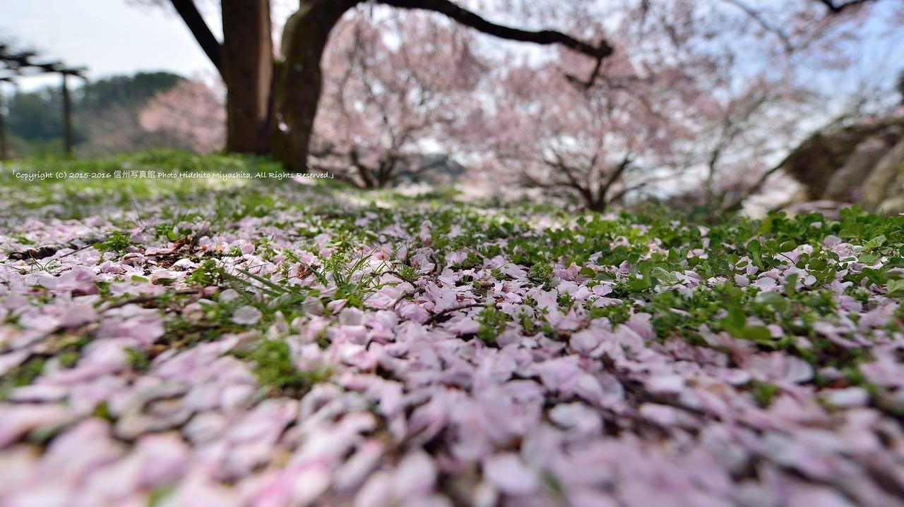 春の名残り