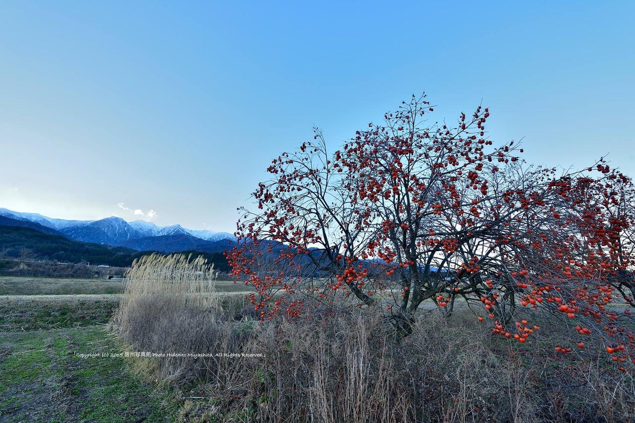 残り柿のある風景