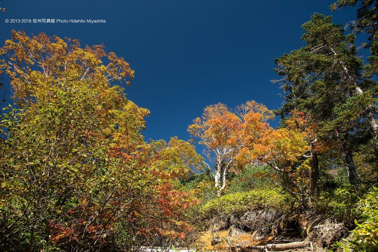 色づく登山道