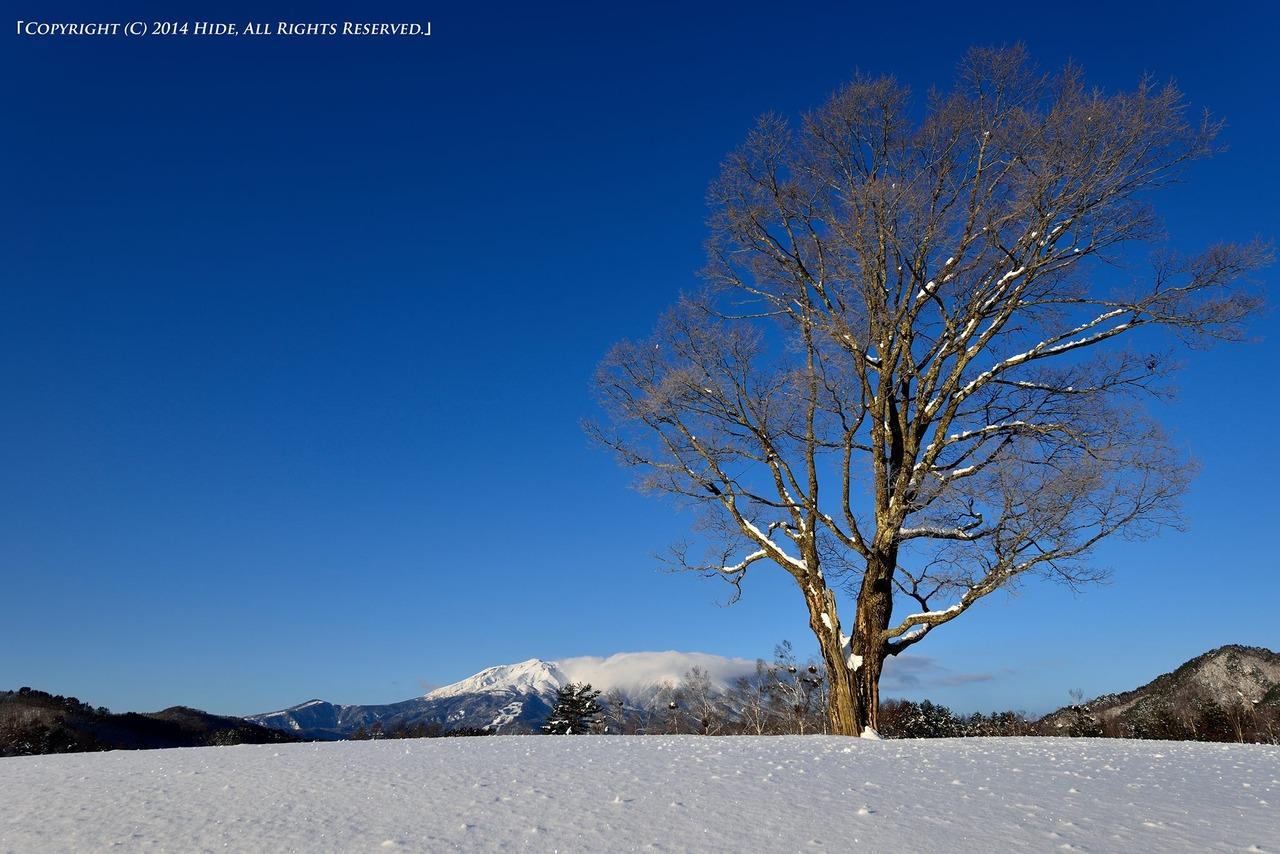コナラと御嶽山