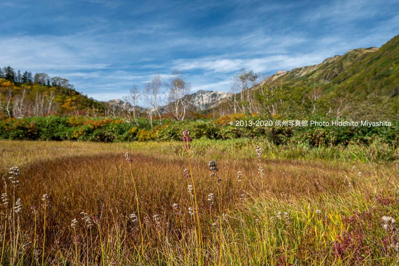 秋の栂池自然園より