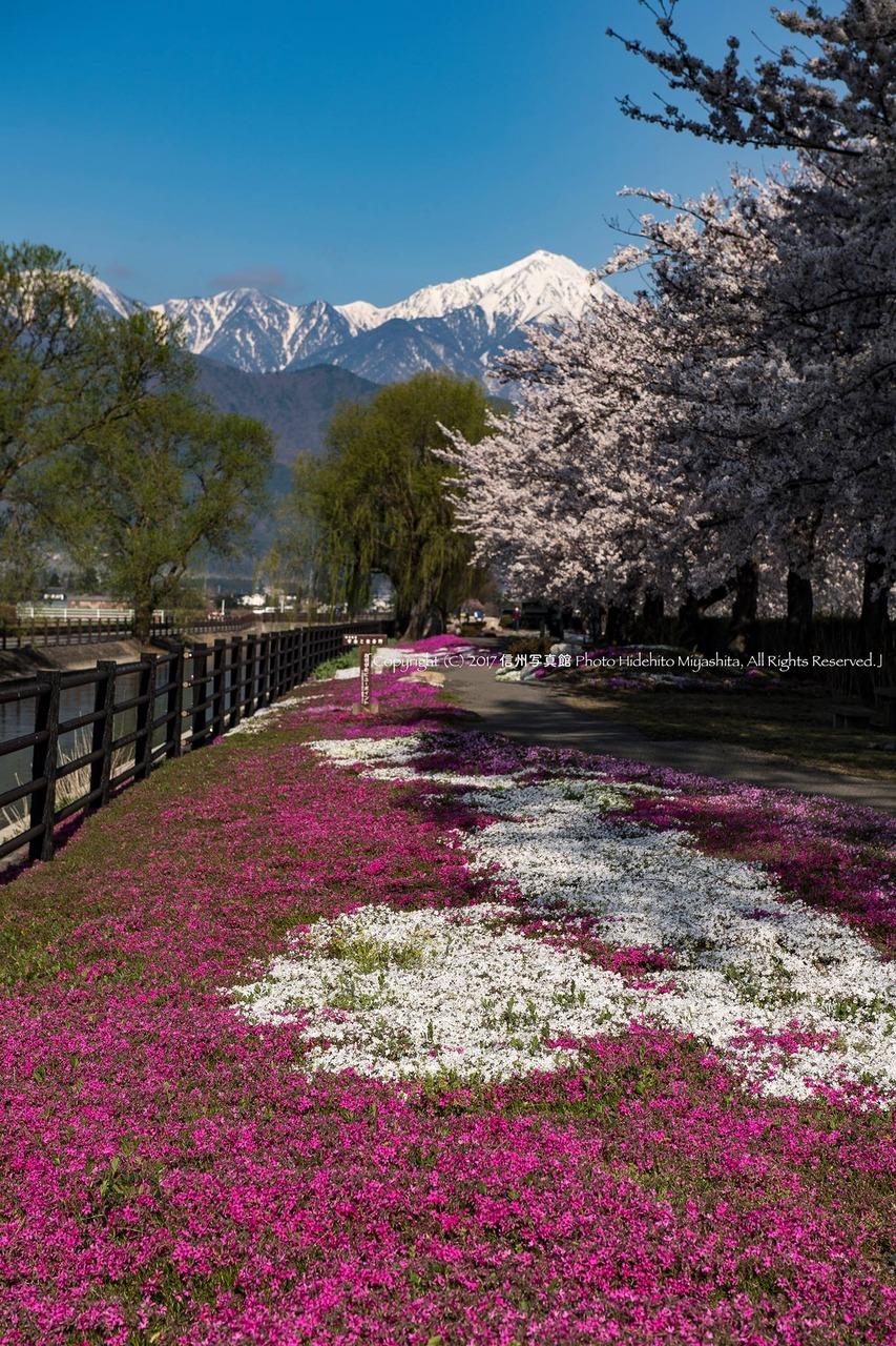 拾ヶ堰の春