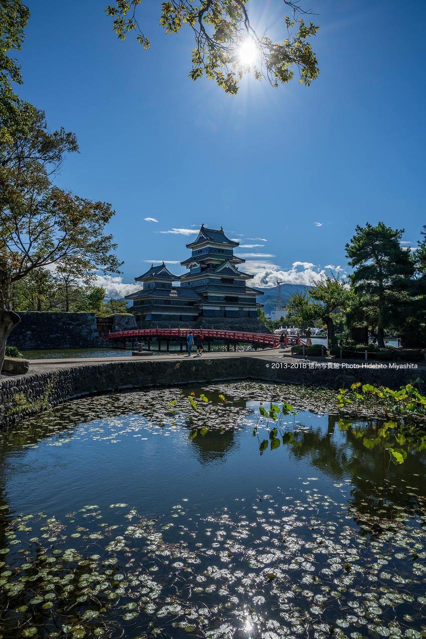 蓮池越しの松本城 (晴れの日Ver)