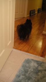 ガード犬(トイレ2)