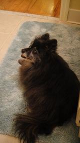 ガード犬(トイレ3)
