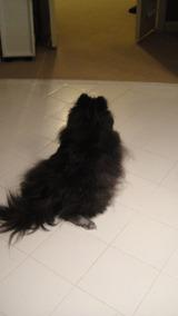ガード犬(バスルーム1)
