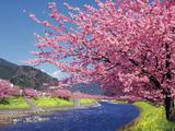 spring_image01