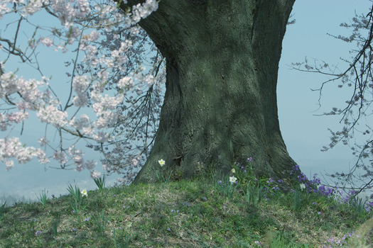 王仁塚の桜_5963